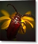 Glowing Beetle Metal Print