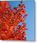 Glowing Fall Maple Colors 1 Metal Print