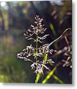 Glowing Grass In Palo Duro Canyon 100613.02 Metal Print