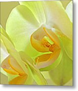 Glowing Orchid - Lemon And Lime Metal Print