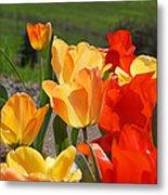 Glowing Sunlit Tulips Art Prints Red Yellow Orange Metal Print