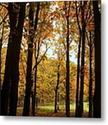 Glowing Through The Trees Metal Print