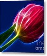 Glowing Tulip Metal Print