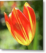 Glowing Tulip Metal Print