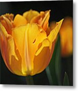 Glowing Tulips Metal Print by Rona Black