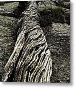Gnarled Metal Print by Christian Rooney
