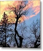 Gnarled Tree Silhouette Metal Print