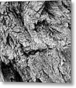Gnarled Wood Metal Print