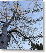 Go Climb A Tree Metal Print