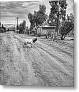 Goat And Box Metal Print