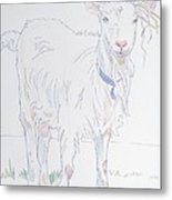 Goat Drawing Metal Print