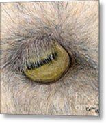 Goat Eye Farm Ranch Animal Art Cathy Peek Metal Print