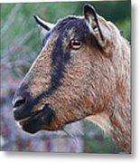 Goat In Profile Metal Print