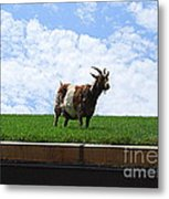 Goat On A Sod Roof In Sister Bay In Wisconsin Metal Print