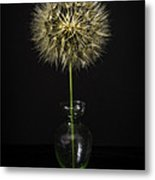 Goat's Beard In Vase Metal Print by Mitch Shindelbower