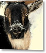 Goatstache Metal Print