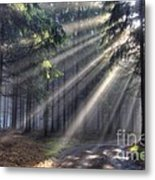 God Beams - Coniferous Forest In Fog Metal Print