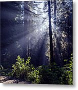 God Rays Through The Fog Metal Print