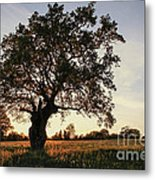 Goddess Tree 2 Metal Print