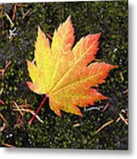 God's Perfect Leaf Metal Print