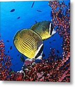 Going For A Swim Metal Print by Cole Black