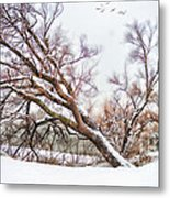 Going Softly Into Winter Metal Print