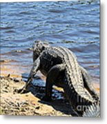 Going To Cool Off Metal Print