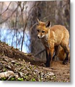 Going To The Den  Metal Print