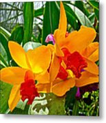 Gold And Red Orchids At Maerim Orchid Farm In Chiang Mai-thailan Metal Print