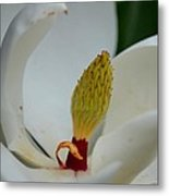 Gold Centered Magnolia Metal Print