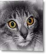Gold Eyes Metal Print