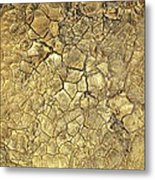 Gold Fever 1 Metal Print
