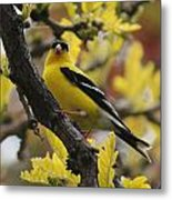 Gold Finch Gold Leaves Metal Print