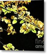 Gold On Black Metal Print