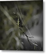 Gold Orb Weaver Metal Print