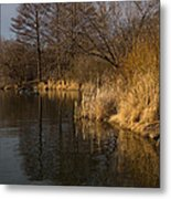Golden Afternoon Reflections Metal Print