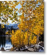 Golden Aspen On The Lake Metal Print