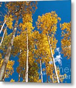 Golden Aspen Stand Metal Print