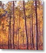 Golden Aspens Of Owl Creek Pass In Southern Colorado Metal Print