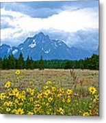 Golden Asters And Tetons From The Road In Grand Teton National Park-wyoming Metal Print