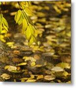 Golden Autumn Colour Foliage On Rainy Pond Metal Print