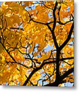 Golden Autumn - Featured 3 Metal Print