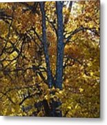 Golden Autumn Foliage At Palenville In October Metal Print