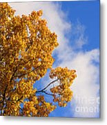 Golden Autumn Leaves And Blue Sky Metal Print