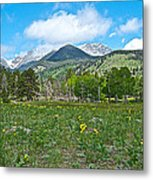 Golden Banner In Horseshoe Park In Rocky Mountain Np-co- Metal Print