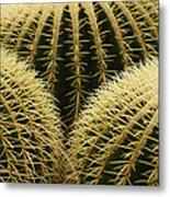 golden barrel cactus Mexico Metal Print