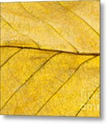 Golden Beech Leaf Metal Print
