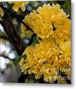 Golden Blooms Two Metal Print