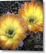 Golden Cactus Flowers  Metal Print