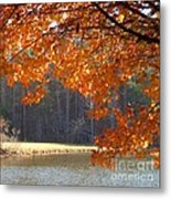 Golden Canopy Metal Print by Pauline Ross